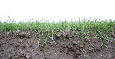 Fertile soil profil with grass.