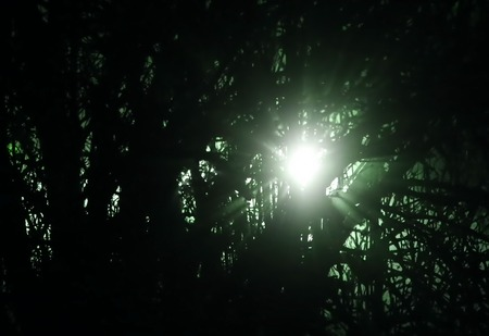 image date: Blinding green light shining through tree in the night.