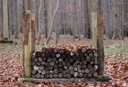 greifswald: Stack of wood in an autumnal beech forest. Stock Photo