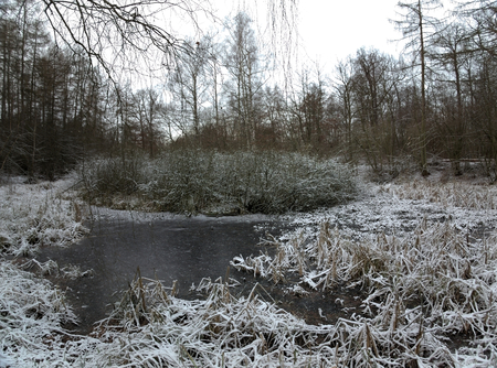 frozen lake: Frozen lake on the Huy in Saxony-Anhalt, Germany. These lakes are called Kollyteiche.