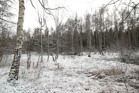 frozen lake: Panoramic view of frozen lake on the Huy in Saxony-Anhalt, Germany. These lakes are called Kollyteiche.