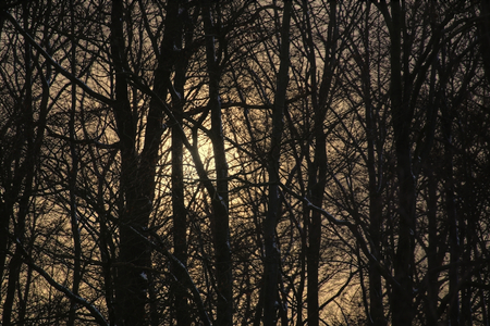image created 21st century: The sun descends behind a bare winter forest. Stock Photo