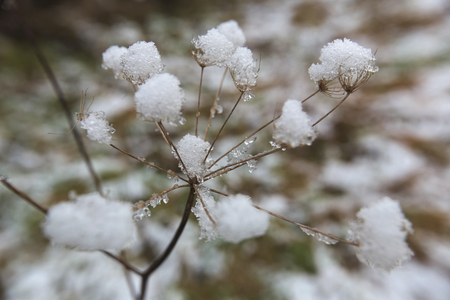 wide angle lens: Snow sticking on an umbel. Creative perspective from inside the umbel using a wide angle lens.