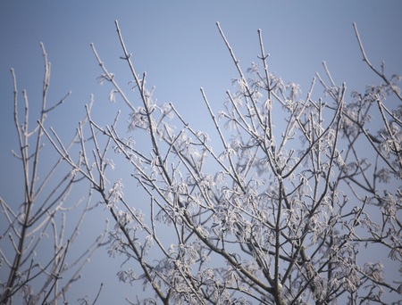 image created 21st century: Frost on a winter tree in the morning. Stock Photo