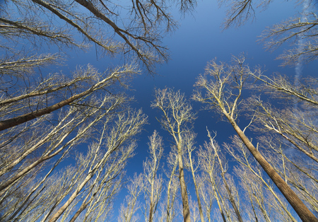 moving images: Bare trees under a clear dark blue sky.