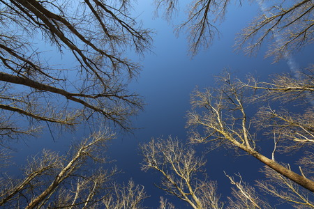 image date: Bare trees under a clear dark blue sky.