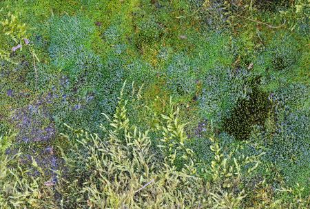 image created 21st century: Dense moss layer with species of different shapes and colors seen from above. Stock Photo