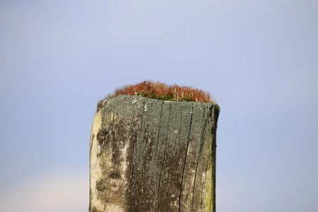 image created 21st century: Red moss on top of a wooden pole with selective focus. Stock Photo