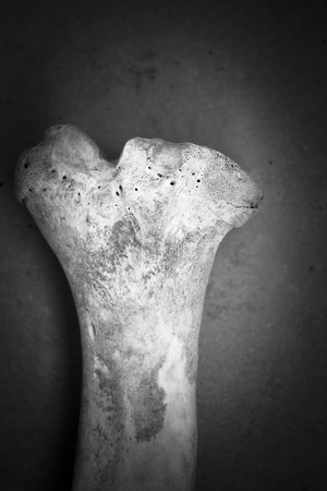 vignetting: Black and white shot of a bone (from a pig). Vignetting was added.
