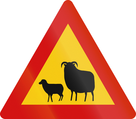 sheep road sign: Icelandic sign warning about sheep crossing or standing on the road.