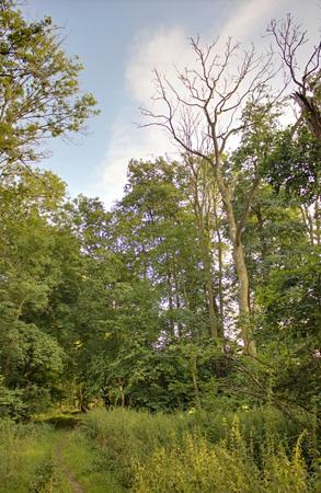 greifswald: Dead tree in NSG Elisenhain, nature reserve near Greifswald, Mecklenburg-Vorpommern, Germany. Stock Photo