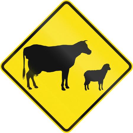 sheep warning: Australian road warning sign - Domestic animal crossing