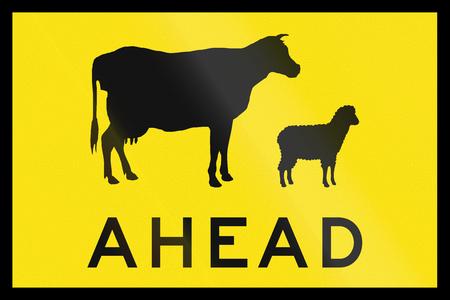 sheep warning: An Australian temporary road sign - Animal crossing ahead