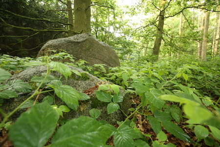 number 14: An ancient megalithic tomb near the town Pustow (Tomb number 14) in Mecklenburg-Vorpommern, Germany.
