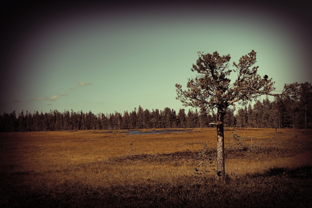 meagre: Bog with pine and lake in Gybbmyren near S�len, Dalarna, Sweden. Stock Photo
