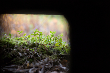 loophole: Abstract shot out of a small loophole in a bunker. Stock Photo