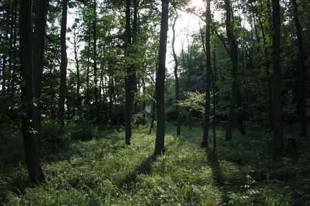 greifswald: Sun In The Woods of Elisenhain, Mecklenburg-Vorpommern, Germany.