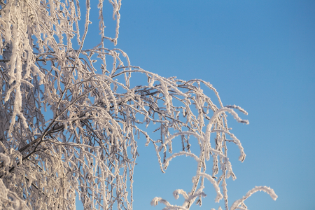 twigs: Frosted twigs on a sunny winter day. Stock Photo