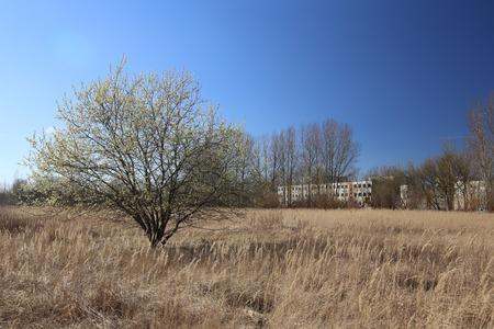 greifswald: Willow in dry grasslands near Greifswald, Mecklenburg-Vorpommern, Germany.