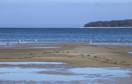 greifswald: Beach in Eldena, Greifswald, Mecklenburg-Vorpommern, Germany. The tide is low.