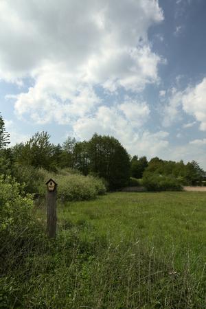 greifswald: Natural monument near Greifswald, Germany: FND Trollblumenwiese und Trockenhang bei Weitenhagen.