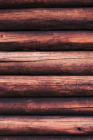 knothole: Wooden logs with a groove and hole structure made by insects.