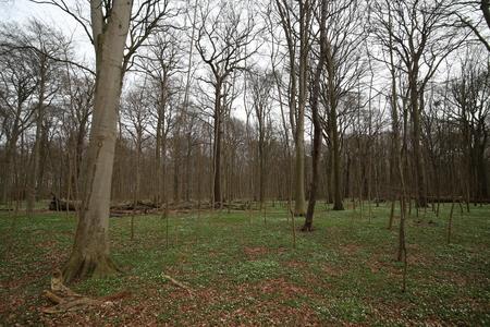 greifswald: Nature reserve NSG Eldena near Greifswald, Mecklenburg-Vorpommern, Germany in spring. Stock Photo