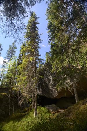 conifer: Big rock in a Swedish conifer forest. Stock Photo