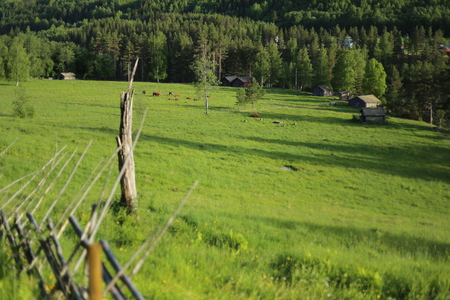 boundary: Meadow with cows and agricultural buildings in Naesaaker in Sweden. Stock Photo