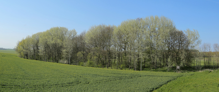 Panorama of Wuestung Spiegelsdorf and rapeseed field in Mecklenburg-Vorpommern. The village was abandoned long ago in the 1920s.