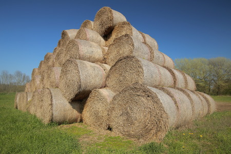 Heap of hay bales in warm sunlight. Stock Photo
