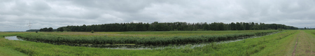 Panoramic view of extensively used meadows beneath the stream Ryck near Heilgeisthof, Mecklenburg-Vorpommern, Germany. Stock Photo