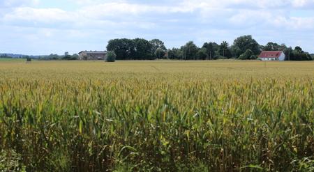 Uitzicht over het veld naar de historische boerderij Eichenhof (eikenhouten boerderij) in Jager, Mecklenburg-Vorpommern, Duitsland. Stockfoto
