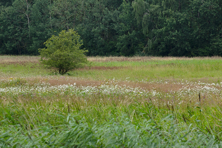 Extensively used meadows beneath the stream Ryck near Heilgeisthof, Mecklenburg-Vorpommern, Germany.