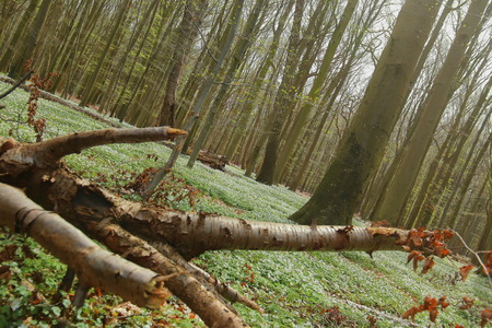 Unusual tilt shot of protected area Grosses Holz near Loissin, Mecklenburg-Vorpommern, Germany.