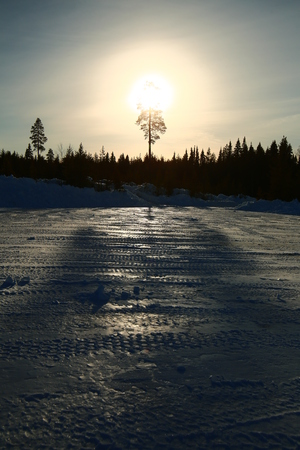 Backlit image of tree with reflections on frozen ground.