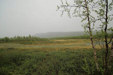 Bog at Nikkaluokta in Sweden on a rainy day.