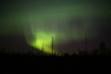 Northern lights over forestscape in the night.