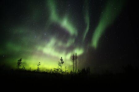Northern lights over forestscape and dead trees in the night.