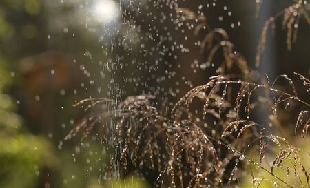 Fine water spray leaving droplets on grass spikes.