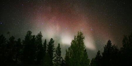 Rare red Northern lights over forestscape in the night.