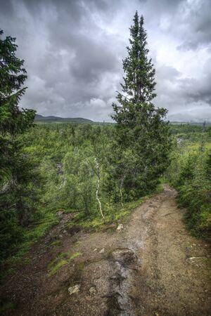 Parting of ways near Gaustafallet waterfall in Jamtland, Sweden.