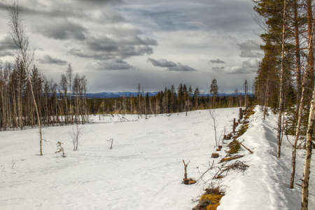 Edge of a snow-covered field near Granbergsliden in Vasterbotten, Sweden.