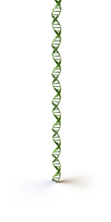 deoxyribonucleic acid: green dna on white background