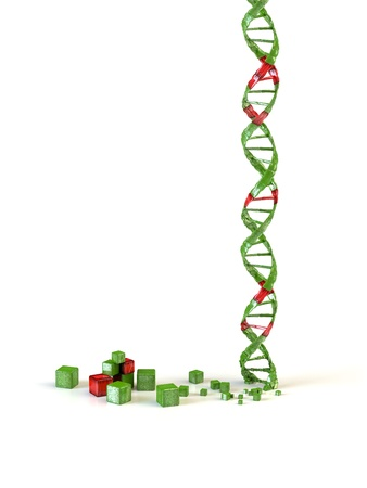 dna spiral isolated in white background photo