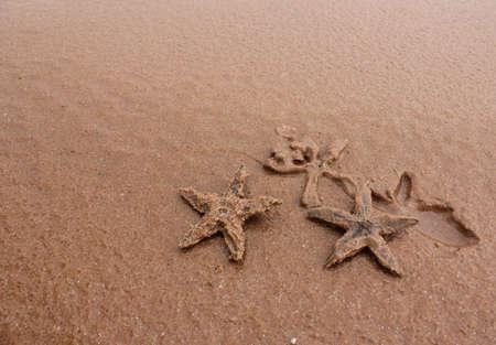 Family starfish photo