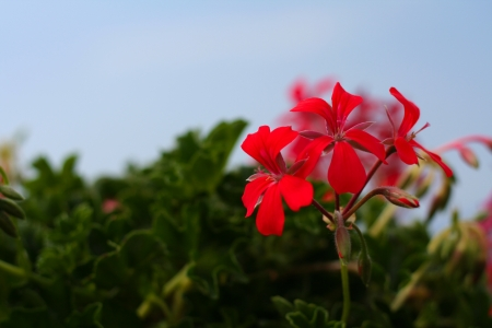 Red flowers on a green and blue background