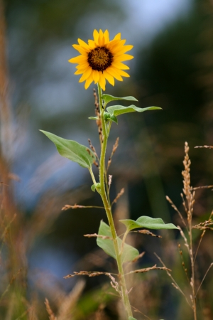 zoomed in: Yellow flower, in a field, zoomed in Stock Photo