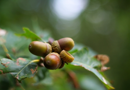 Nuts on a tree, branch vision and bokeh