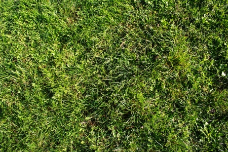Grass background high detailed and easy for texturing Stock Photo - 16721291